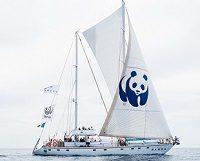 Blue Panda Geliyor!